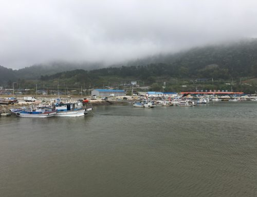 Halfway there: Reflections on a year and a half in Jeollanamdo, Korea